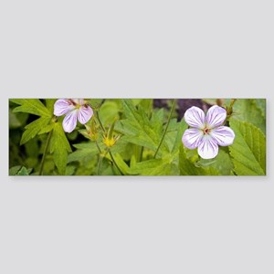 Woodland Wildflowers Sticker (Bumper)