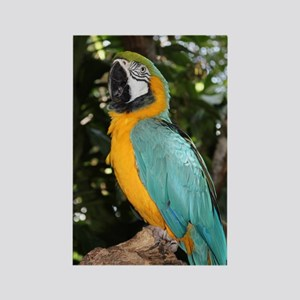 Yellow and Blue Macaw Rectangle Magnet
