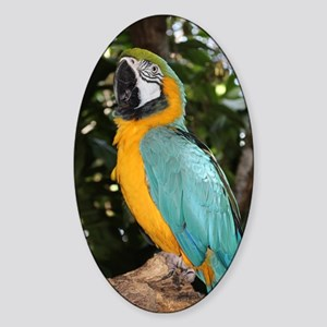 Yellow and Blue Macaw Sticker (Oval)