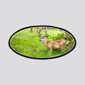 Buck in a Lush Green Meadow Patch