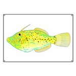 Scrawled Filefish Banner