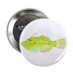 Scrawled Filefish 2.25