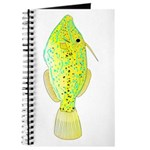 Scrawled Filefish Journal