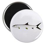 Ladyfish Magnets
