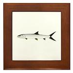 Ladyfish Framed Tile