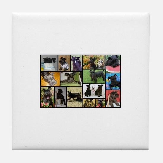 Black Schnauzer Collage Tile Coaster
