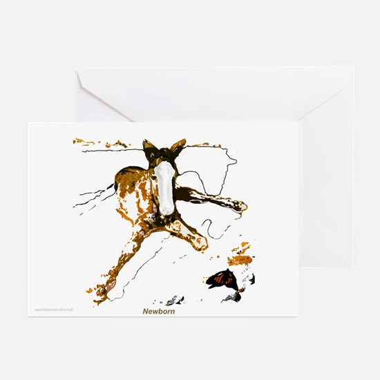 Newborn foal cards 10p/blank/boxed