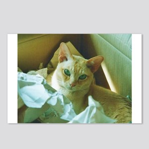 Red Burmese Cat in box Postcards (Package of 8)