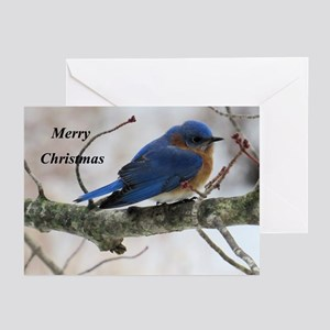 Bluebird greeting cards cafepress snow bluebird greeting cards m4hsunfo Image collections