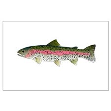 Rainbow Trout - Stream Posters