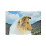 Collie (Rough) Rectangle Magnet (100 pack)