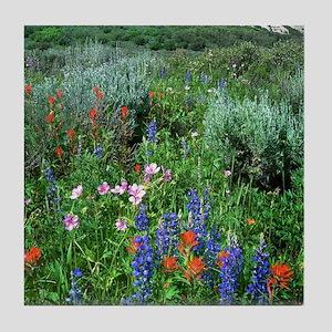 Wildflowers, Beautiful Colorado Tile Coaster