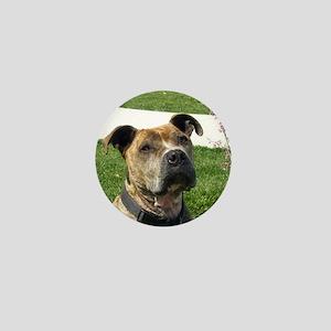 Pitbull Dog Mini Button