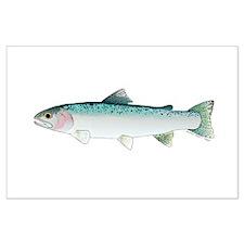 Steelhead rainbow trout Posters