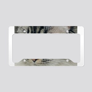 Blue Eyes License Plate Holder