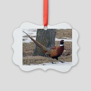 Ringneck Pheasant Picture Ornament