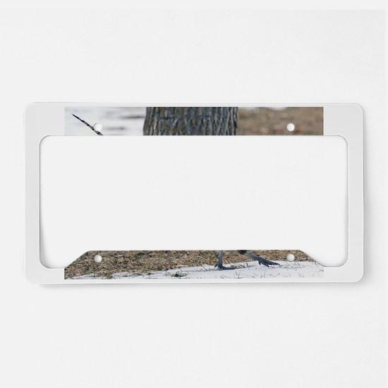 Ringneck Pheasant License Plate Holder