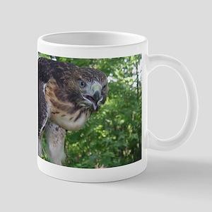 Red Tailed Hawk Mugs