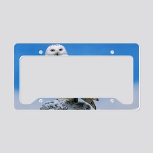 Snowy Owl License Plate Holder