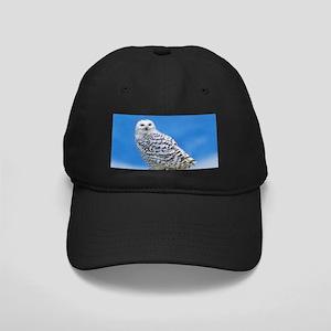 Snowy Owl Black Cap