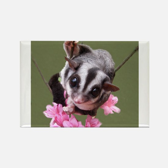 Unique Sugar glider Rectangle Magnet