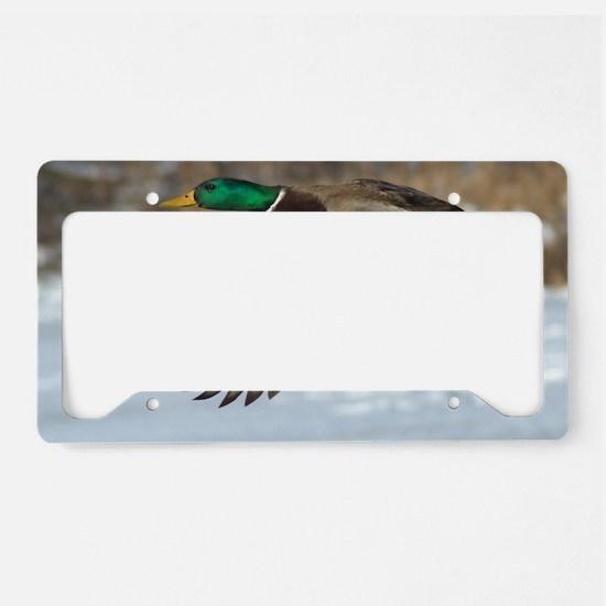 Mallard Duck License Plate Holder