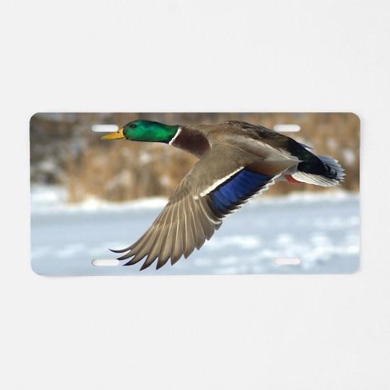 Mallard Duck Aluminum License Plate
