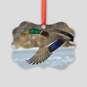 Mallard Duck Picture Ornament