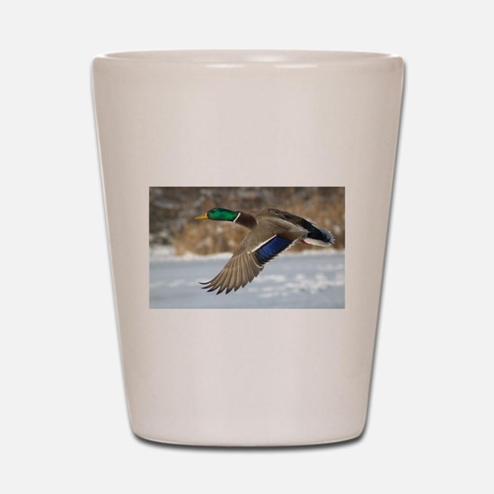 Mallard Duck Shot Glass