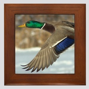 Mallard Duck Framed Tile