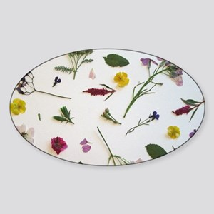 Pressed Flowers  Sticker (Oval)