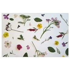 Pressed Flowers  Poster