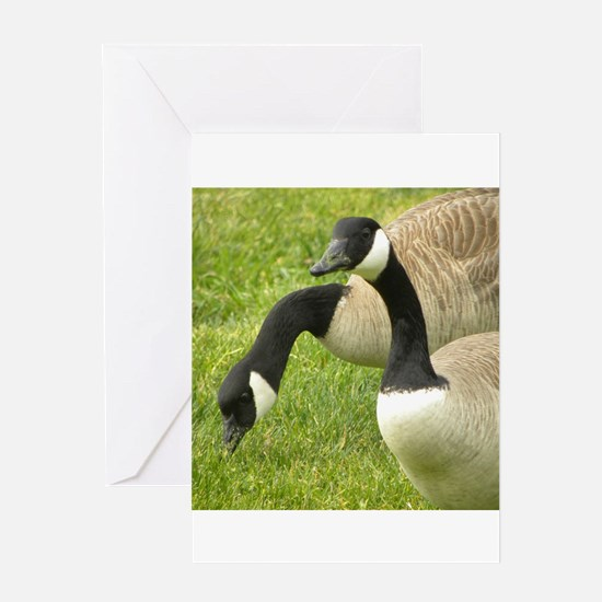 Geese Greeting Cards