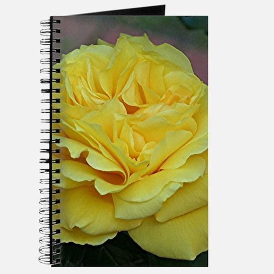 Yellow rose flower in bloom in garden Journal