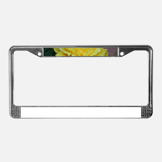 Yellow rose flower in bloom in License Plate Frame