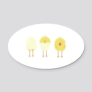 Hatched Chick Oval Car Magnet