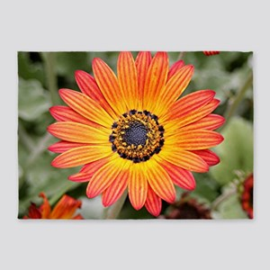 Orange and Yellow Gazania Flowers i 5'x7'Area Rug