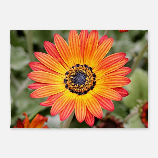 Orange and Yellow Gazania Flowers i 5'x7'Area Rug