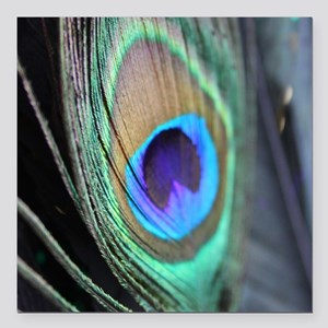 """Peacock Feather Bright Square Car Magnet 3"""" x 3"""""""