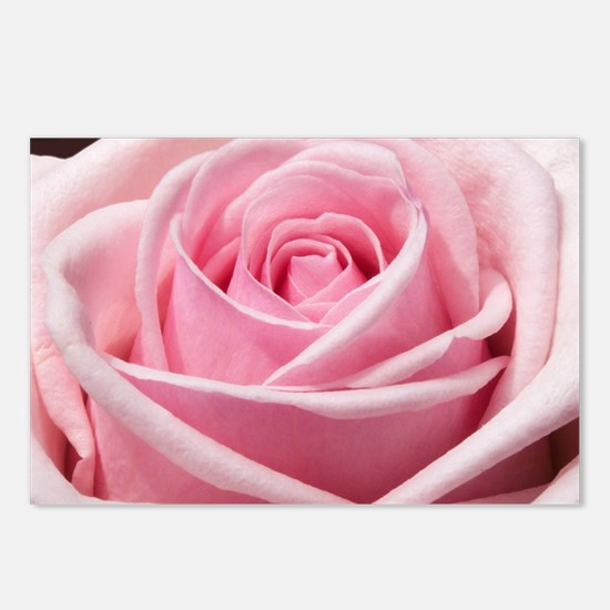 Light Pink Rose Close Up Postcards (Package of 8)