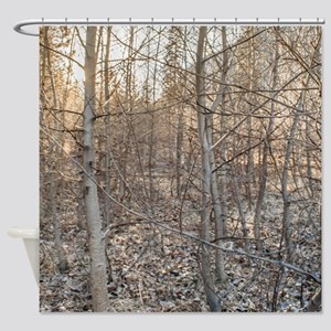 Leafless Forest at Sunset Shower Curtain