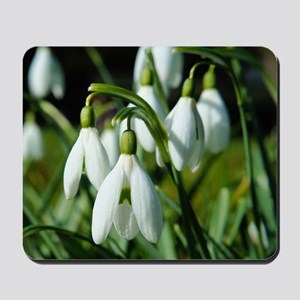 Snowdrops (flowers) Mousepad