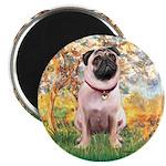 Spring / Pug Magnet