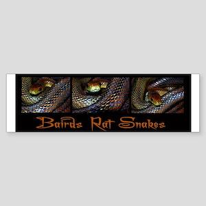 Bairds Rat Snakes2 Bumper Sticker