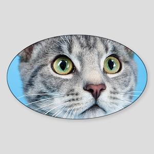 Beautiful Green Eyed Kitty Cat Sticker