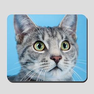 Beautiful Green Eyed Kitty Cat Mousepad