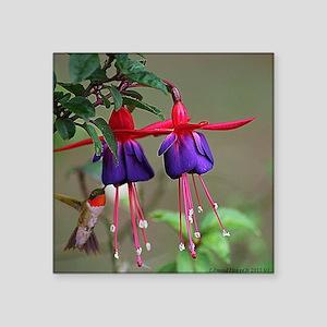 "Fuchsia and Hummingbird  Square Sticker 3"" x 3"""
