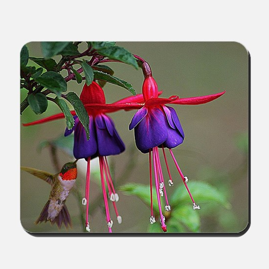 Fuchsia and Hummingbird  Mousepad