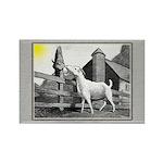 Goat-MorningSnack Rectangle Magnet (10 pack)