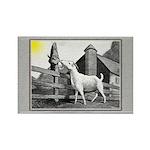 Goat-MorningSnack Rectangle Magnet